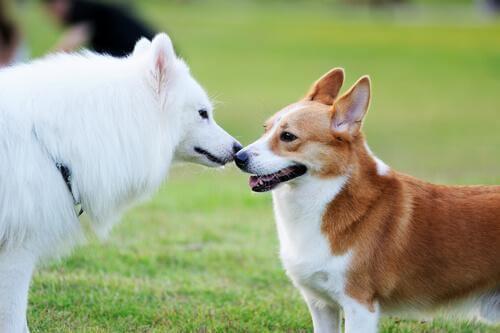 Tips för hur man får två hundar att bli vänner