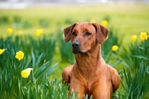 Huskurer för hundar: naturliga och effektiva