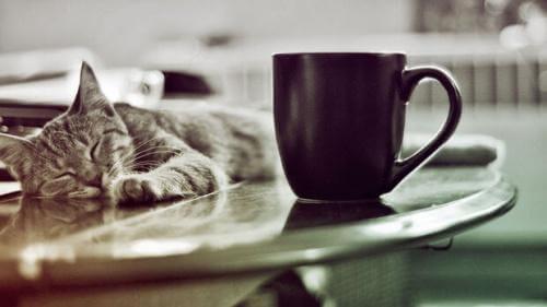 Katt bredvid kaffekopp