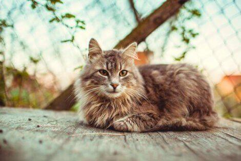 Katt på veranda