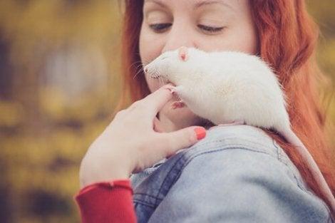 Råtta på axel