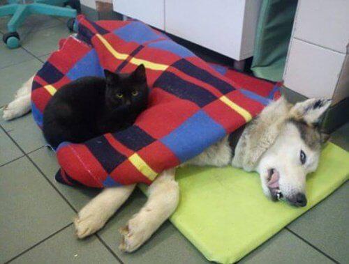 Sjuk hund med katt
