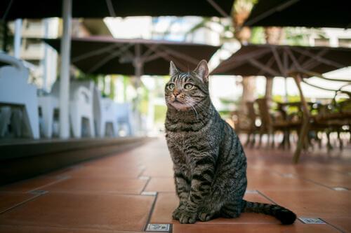 Kattkaféer: en kopp kaffe omgiven av katter