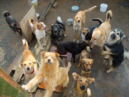 Hundar samlade hos djurhem väntar på att bli adopterade.