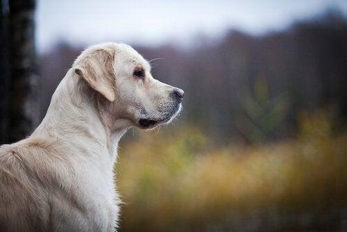 Hur man känner igen hjärtsjukdom hos hundar