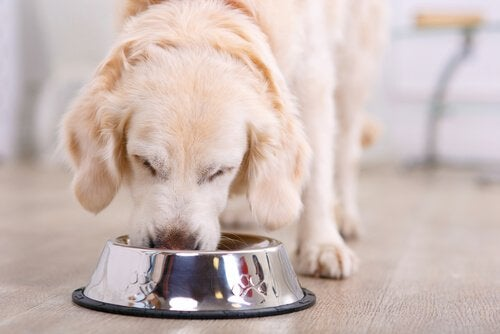 En hund äter ur sin matskål.