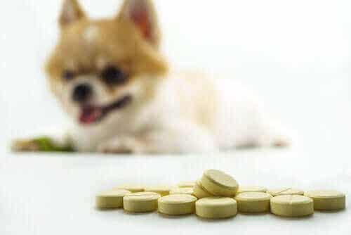 Naturliga och kemiska tillskott för hundens leder