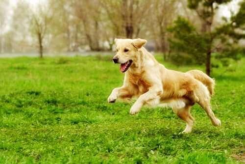 Motionsidéer för hunden för att hålla den i form