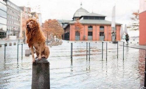 Hund med röd peruk sitter på en pelare och ser ut som ett lejon.