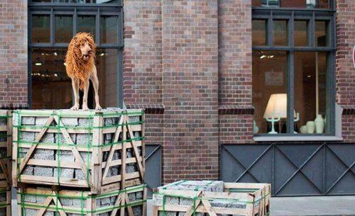 En hund med lejonman utanför ett tegelhus.