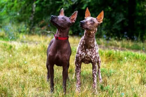 Två hundar bredvid varandra.