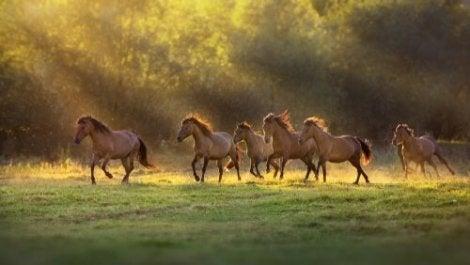 Hästar i grupp