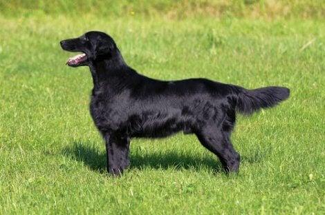 Hund med glansig päls
