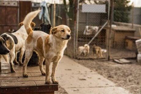 Hundar i djurhem