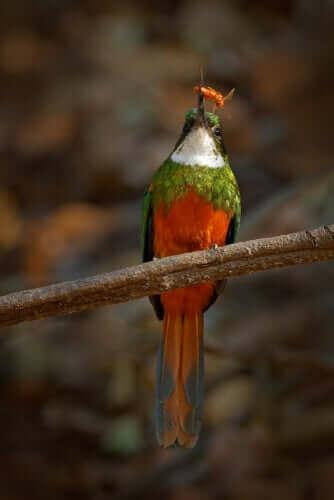 Fågel som sitter på pinne.