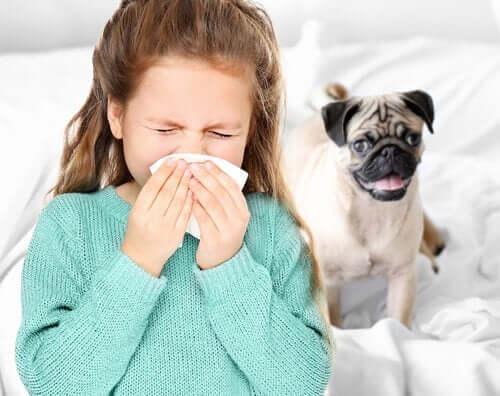 Önskar sig allergivänliga hundar