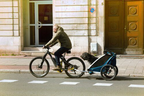 Hund som åker i en cykelvagn.