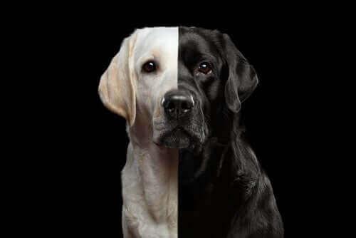 Kloning av hundar – är detta en laglig företeelse?