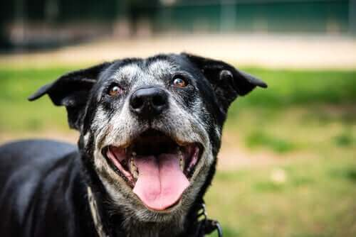 Hund som ser glad ut.