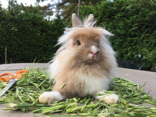 En kanin med mat sitter bland sin mat.