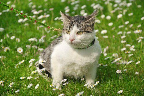 Katt som sitter bland blommor i gräset.