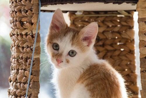 Kattunge inne i sitt katthus.