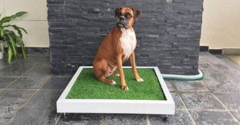 Kissmattor för hundar av gräs.