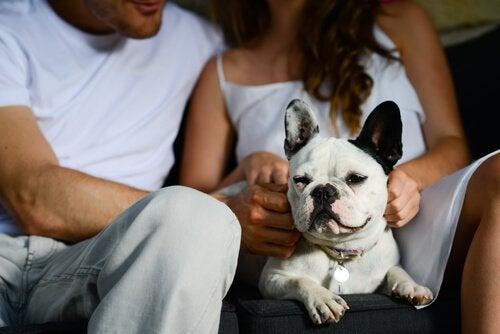 Ett kärlekspar med hund i famnen.