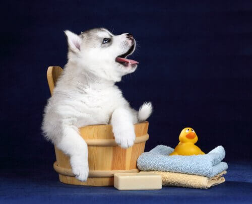 Valp i en badtunna redo för att bli ren.