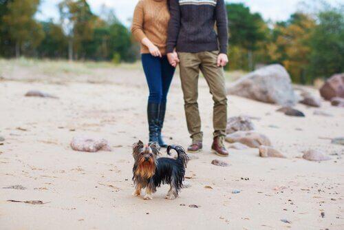 Att ha en hund som är svartsjuk på ens partner