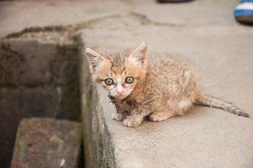 Kattunge som har gått vilse i stan.