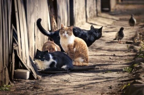 Hemlösa katter på gatan