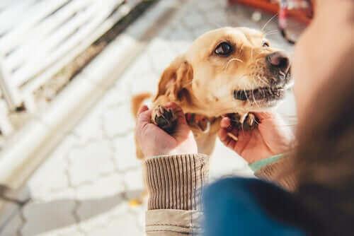 Hur hundar känner igen familjemedlemmar