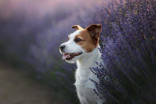 Tre medicinalväxter för husdjurs hälsa