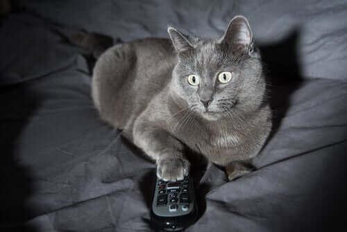 4 orsaker till ovanliga nattliga beteenden hos katter