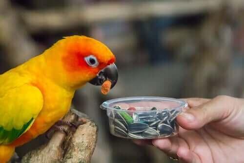 En papegoja äter frön ur burk.