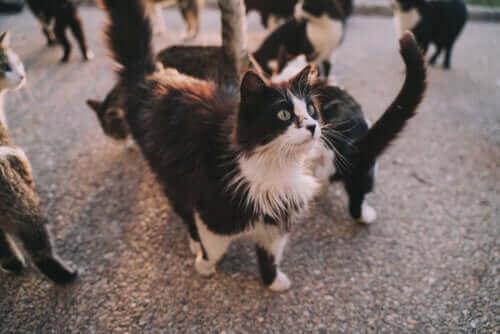 Kan du smittas av sjukdomar från din katt?