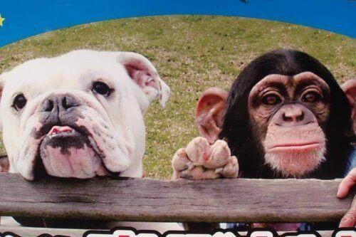 Kändisdjur: apan Pankun och hans hund James