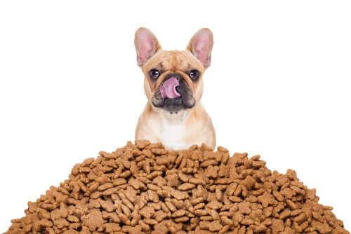Hur du beräknar den ideala portionen mat för din hund