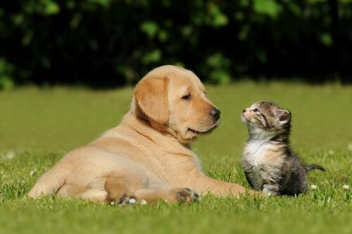 Valp och kattunge njuter av det gröna gräset.