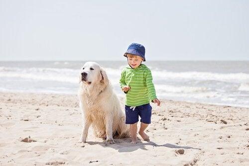 Hund och barn på stranden tillsammans.