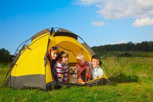 Att campa tillsammans med hundar och barn