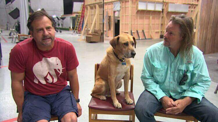 Hunden kato med ägare.