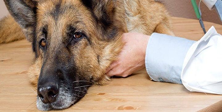 Interna hundparasiter och hälsofaran de för med sig