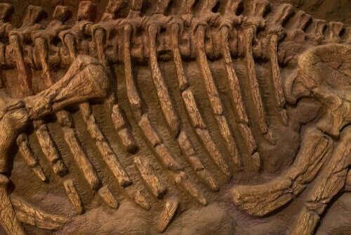 Fossil av en jättepapegoja.