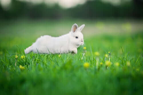 En kanin springer över en grön äng.