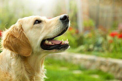 Fördelar och nackdelar med laserlek för ditt husdjur