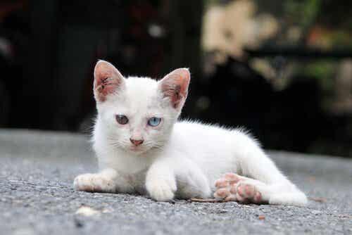 Övergivna sällskapsdjur: ett problem året runt