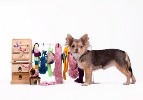 Hund med accessoarer