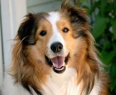 Hund med öppen mun